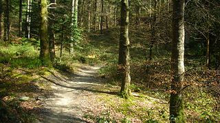 320px-Michael_Spiller_-_twisty_forest_paths_(by-sa)